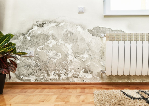 Common reasons for wet walls and how to fix them